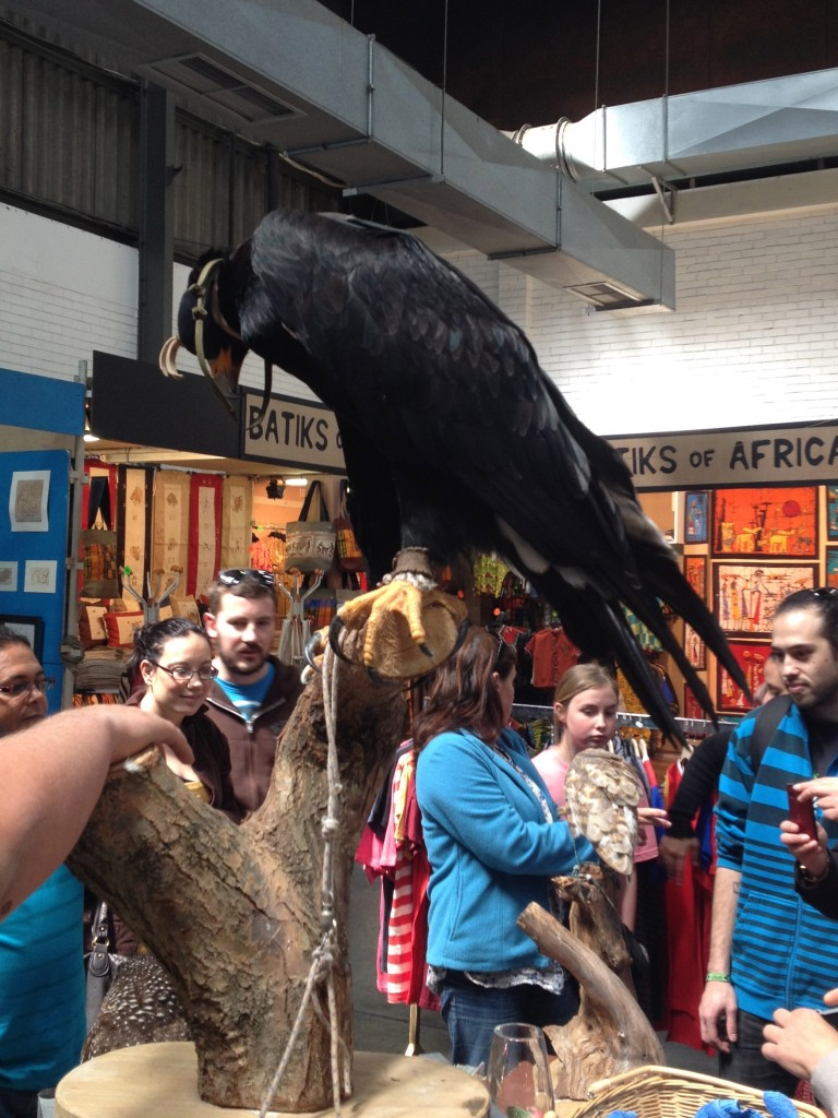 Black Eagle from Spiers Eagle Encounters, Stellenbosch at the V and A Waterfront.
