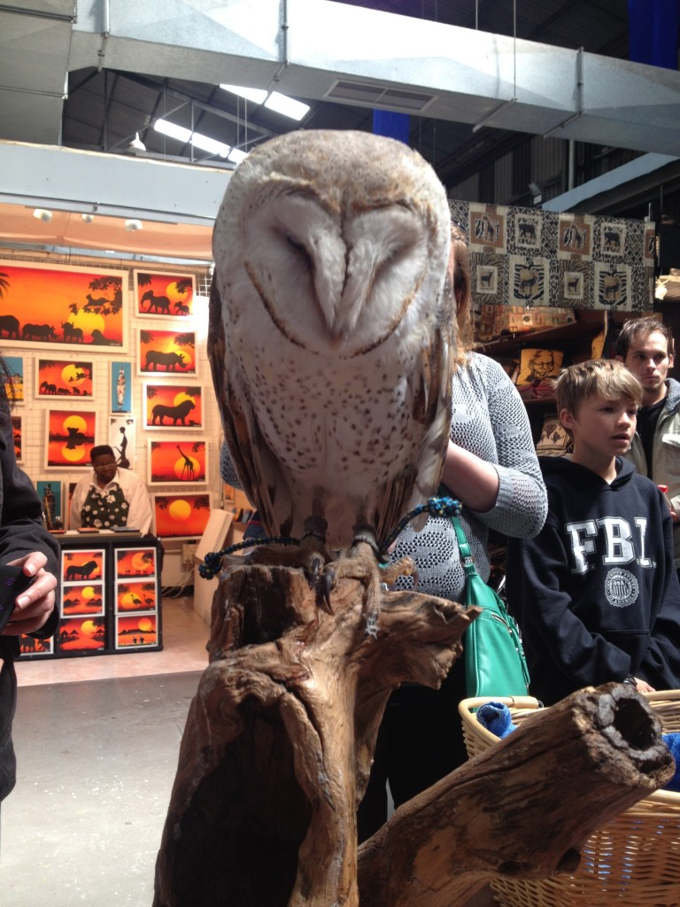 Barney the Barn Owl at the V&A Waterfront