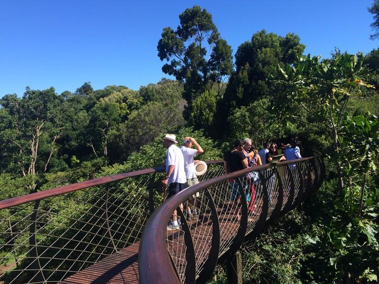 People on Wooden bridget over tree tops