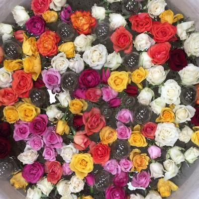 Boere Sjiek rose bowl sink