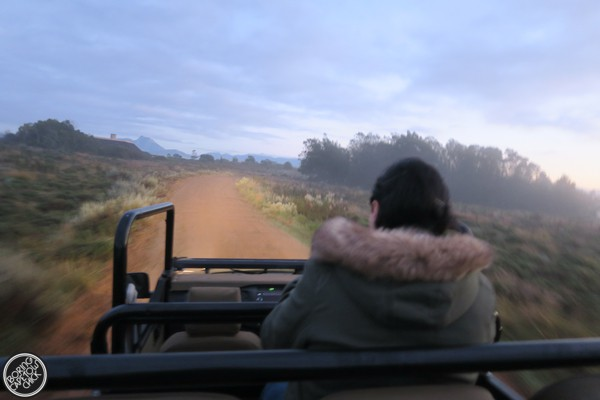 Game Drive at Gondwana