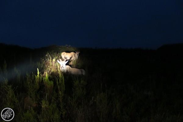 Gondwana Eiland