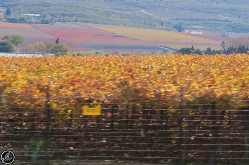 Wine Farms in Montague