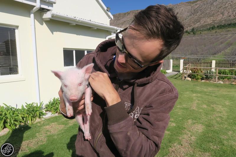 Baby Langdam Pig