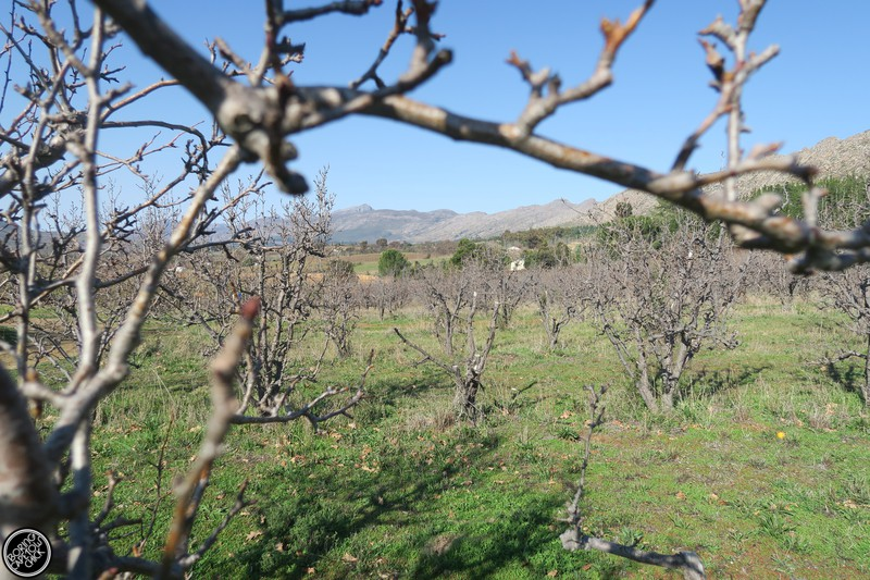 Langdam Farm Orchards
